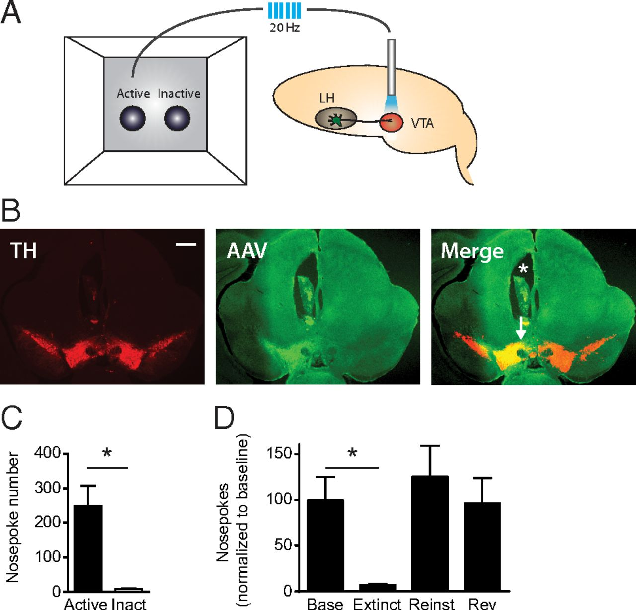 Hypothalamic Neurotensin Projections Promote Reward By Enhancing Circuit Board From A Defunct Optical Computer Mouse Picture Of The Download Figure