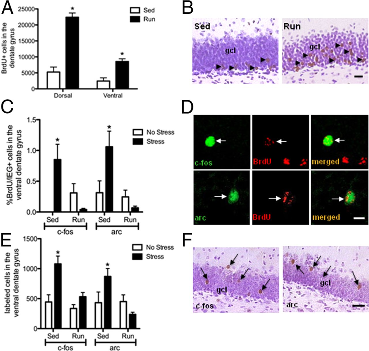 Physical Exercise Prevents Stress-Induced Activation of