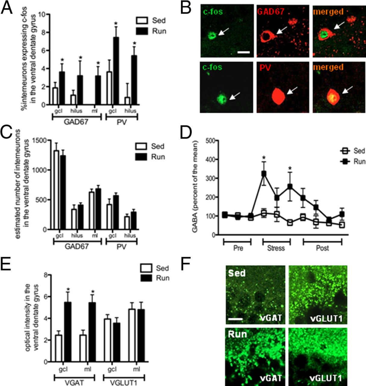 Physical Exercise Prevents Stress-Induced Activation of Granule