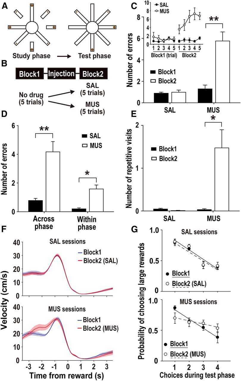 Effects Of Prefrontal Cortical Inactivation On Neural Activity In Wiring Diagram For Ih 234 Download Figure