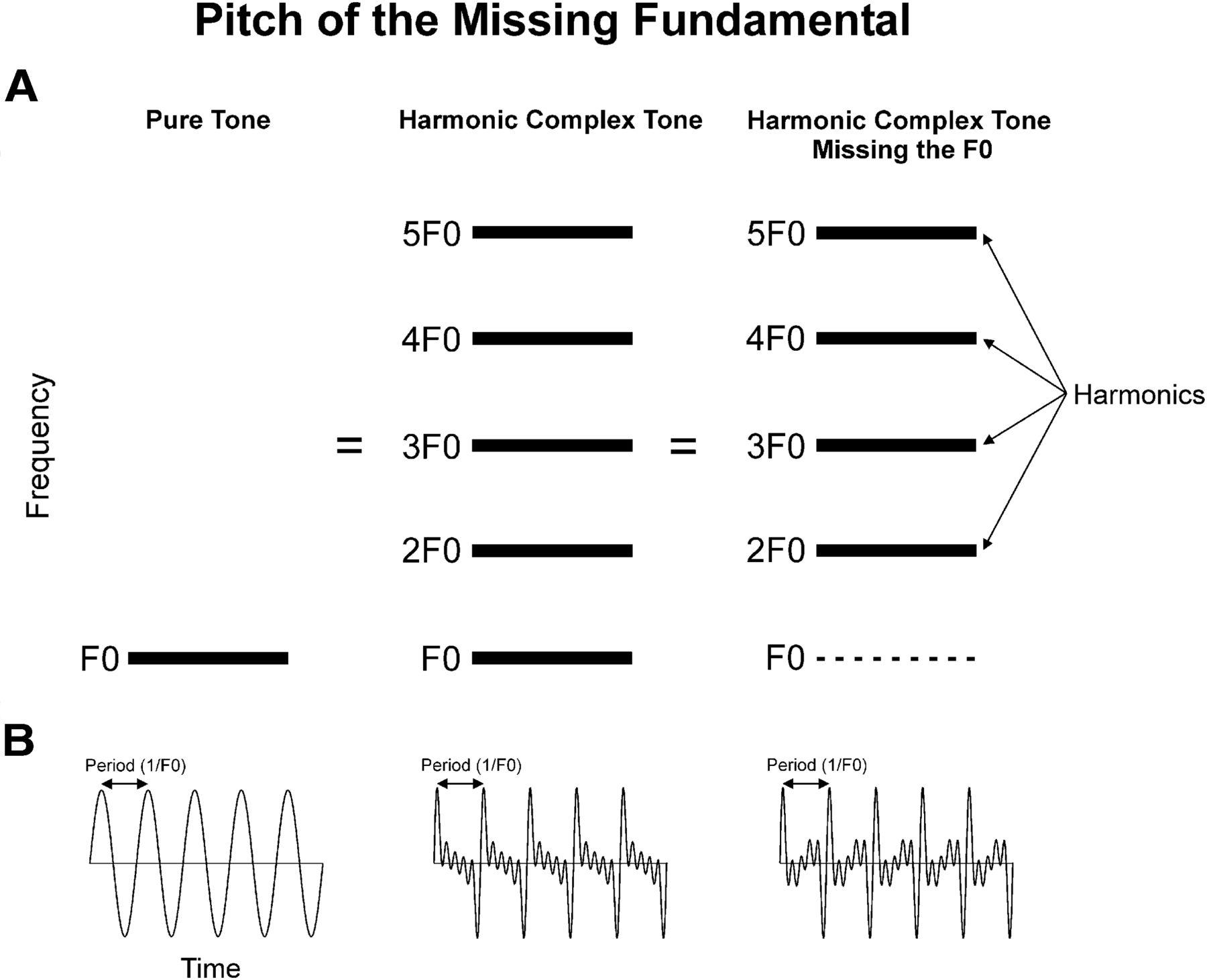 Neural Representation of Harmonic Complex Tones in Primary