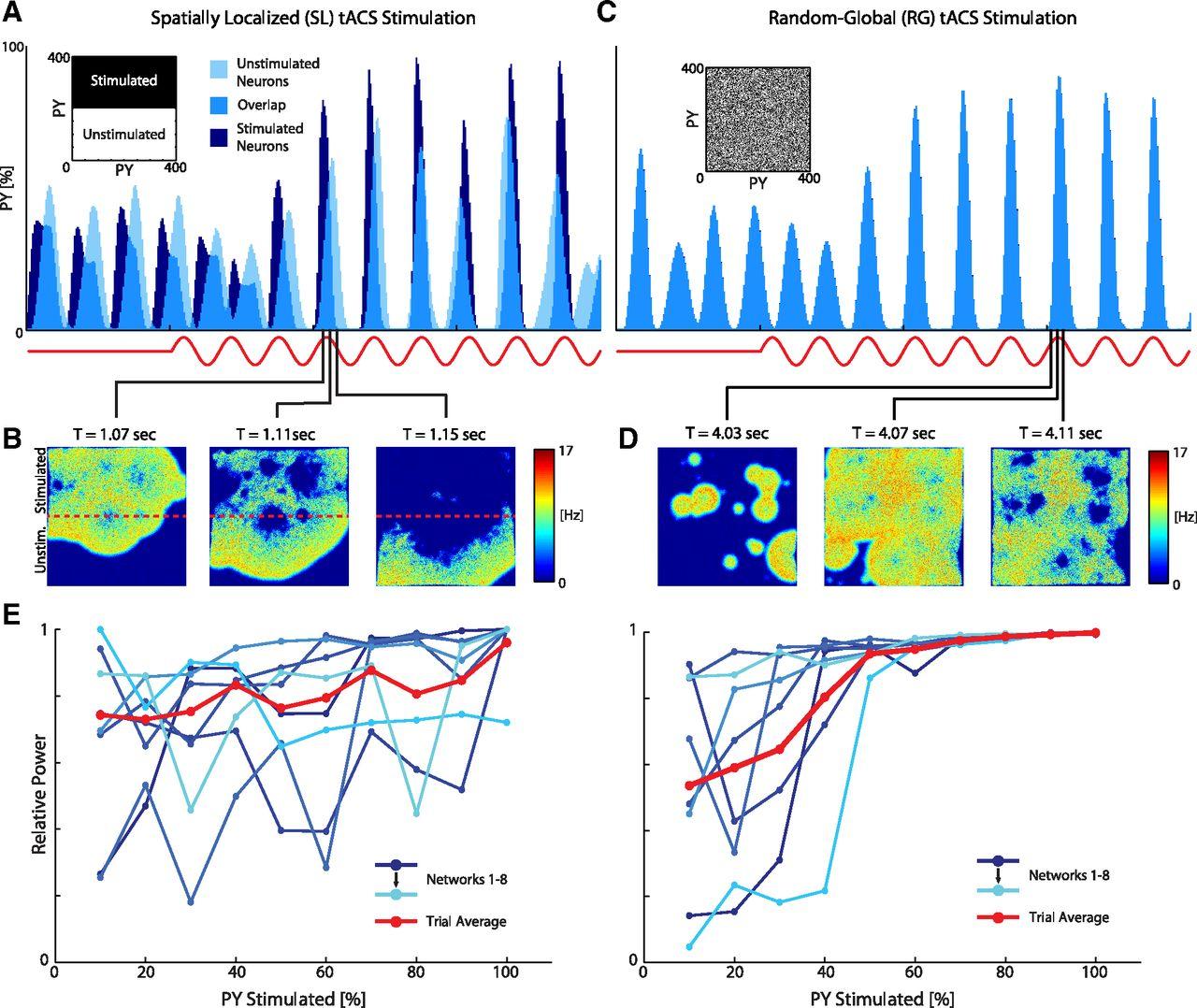 Transcranial Alternating Current Stimulation Modulates Large-Scale