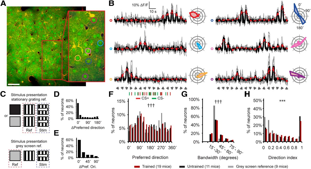 In Vivo Two-Photon Ca2+ Imaging Reveals Selective Reward Effects on ...