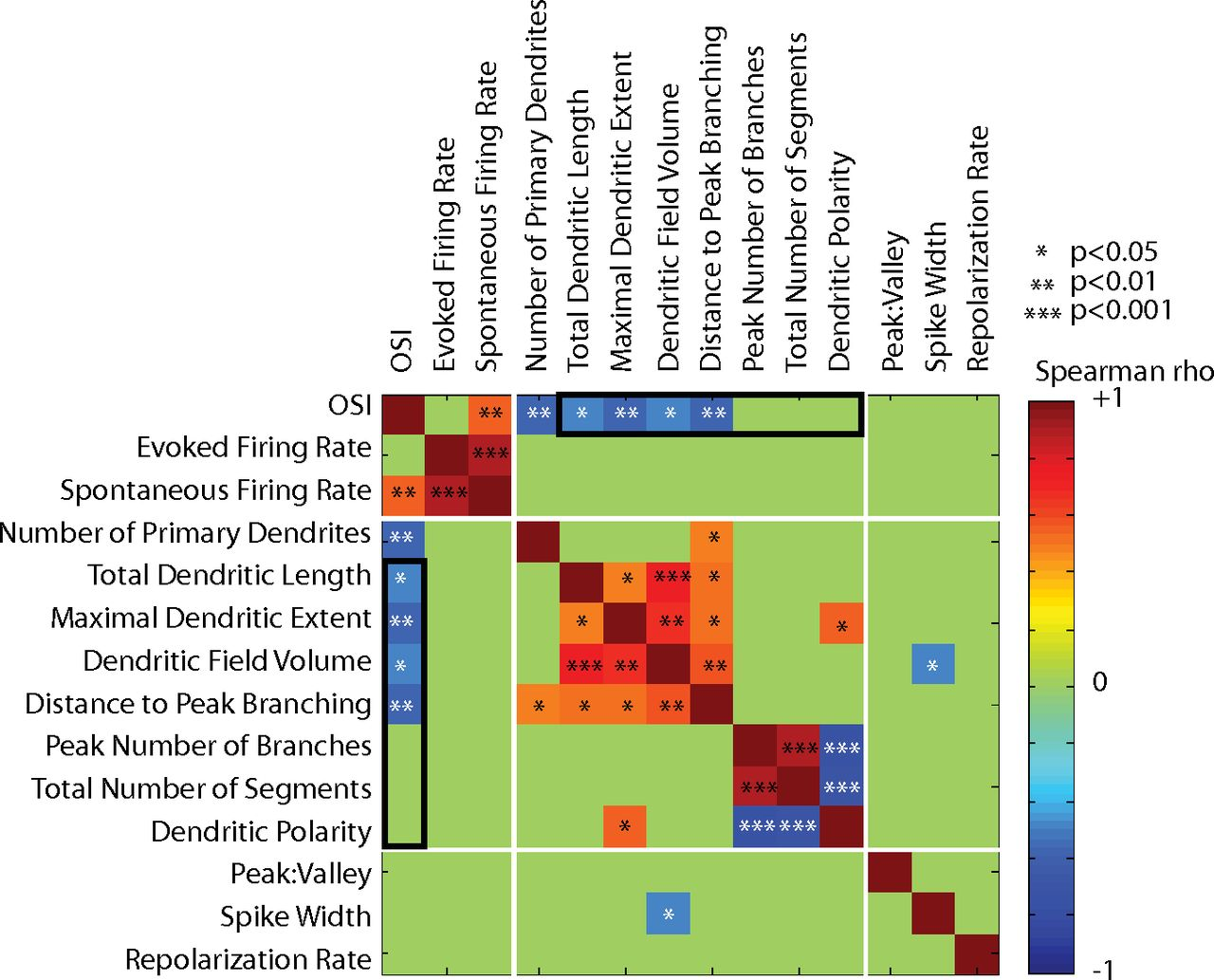 Response Selectivity Is Correlated to Dendritic Structure in ...