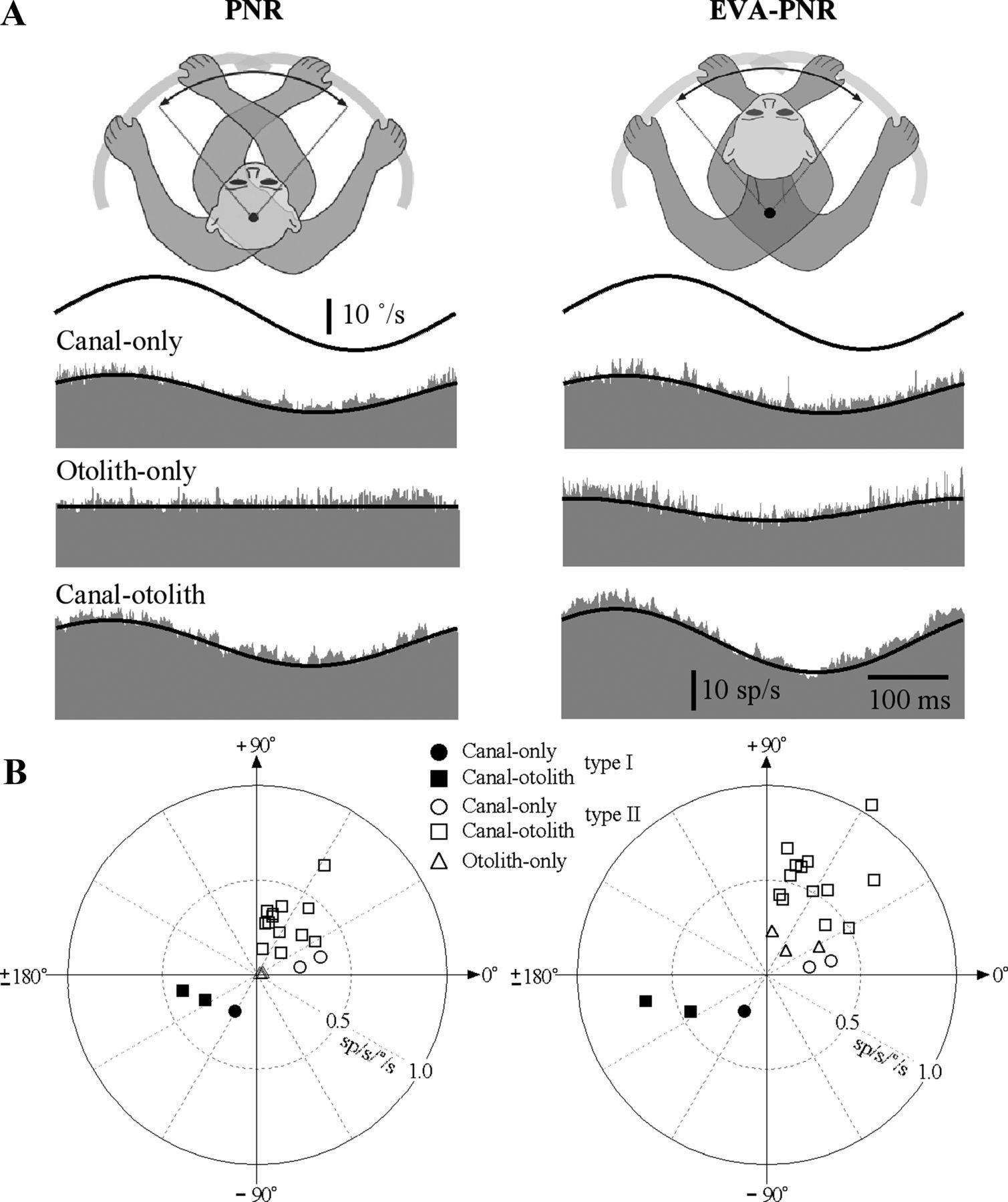 Convergence of Vestibular and Neck Proprioceptive Sensory