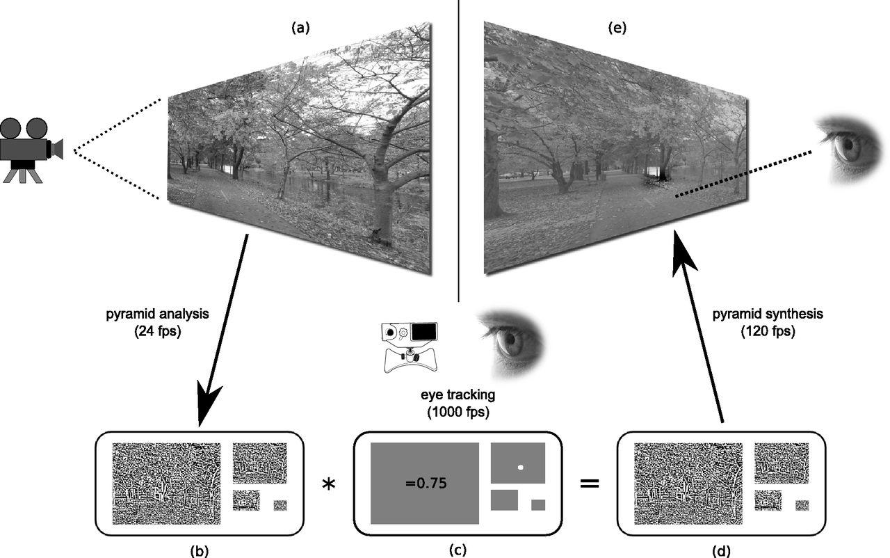 Peri-Saccadic Natural Vision | Journal of Neuroscience