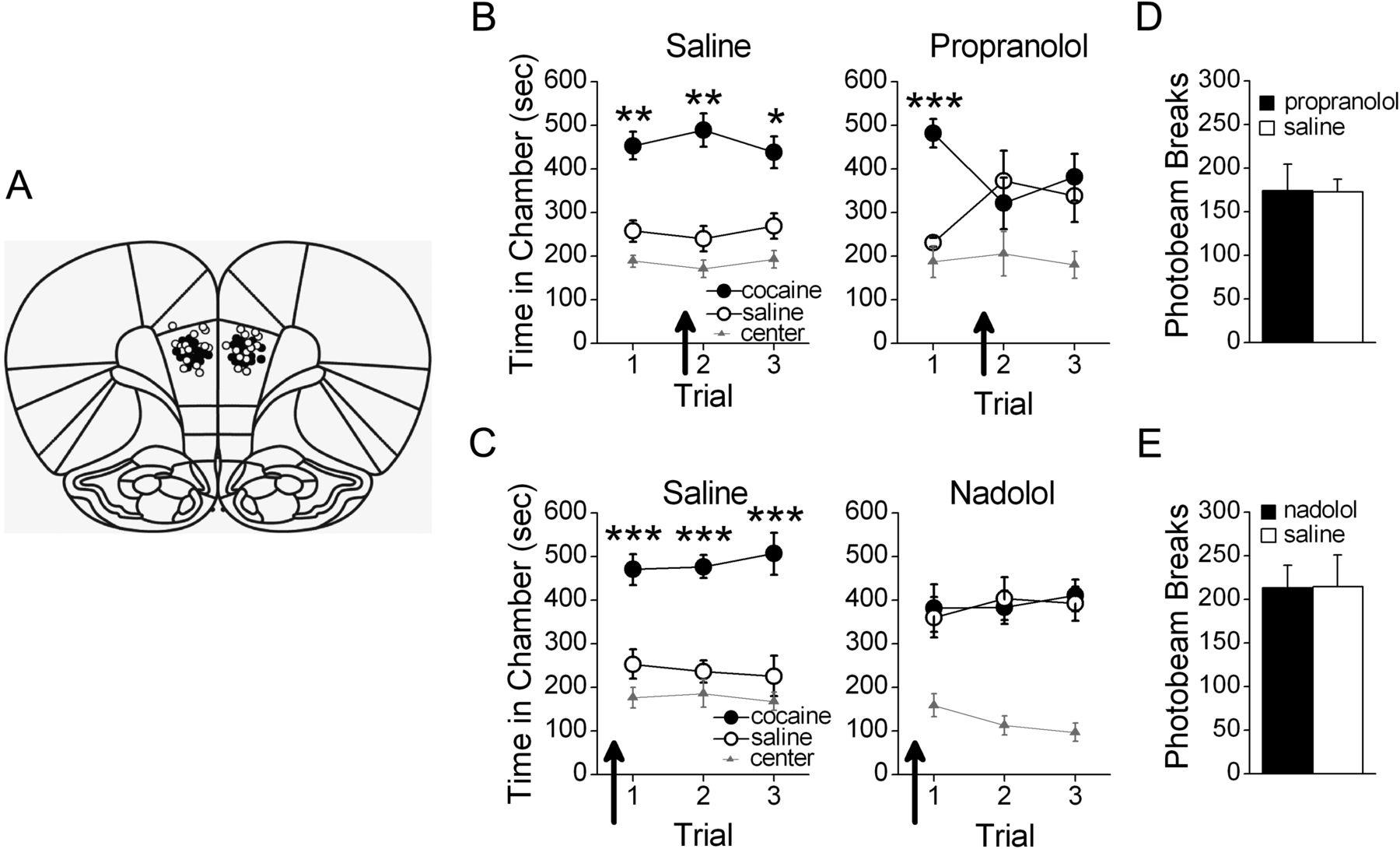 Neurobiological Dissociation of Retrieval and Reconsolidation of