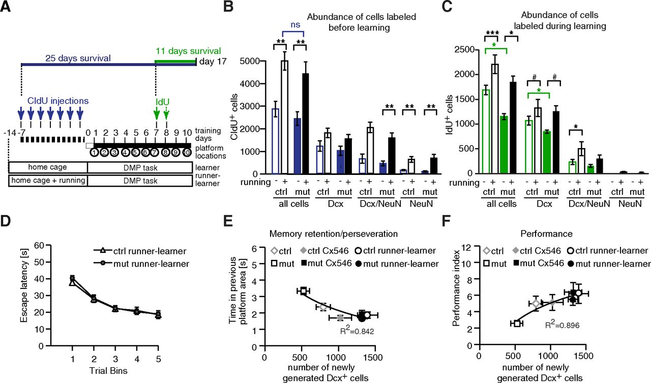 Neuronal Rac1 Is Required for Learning-Evoked Neurogenesis