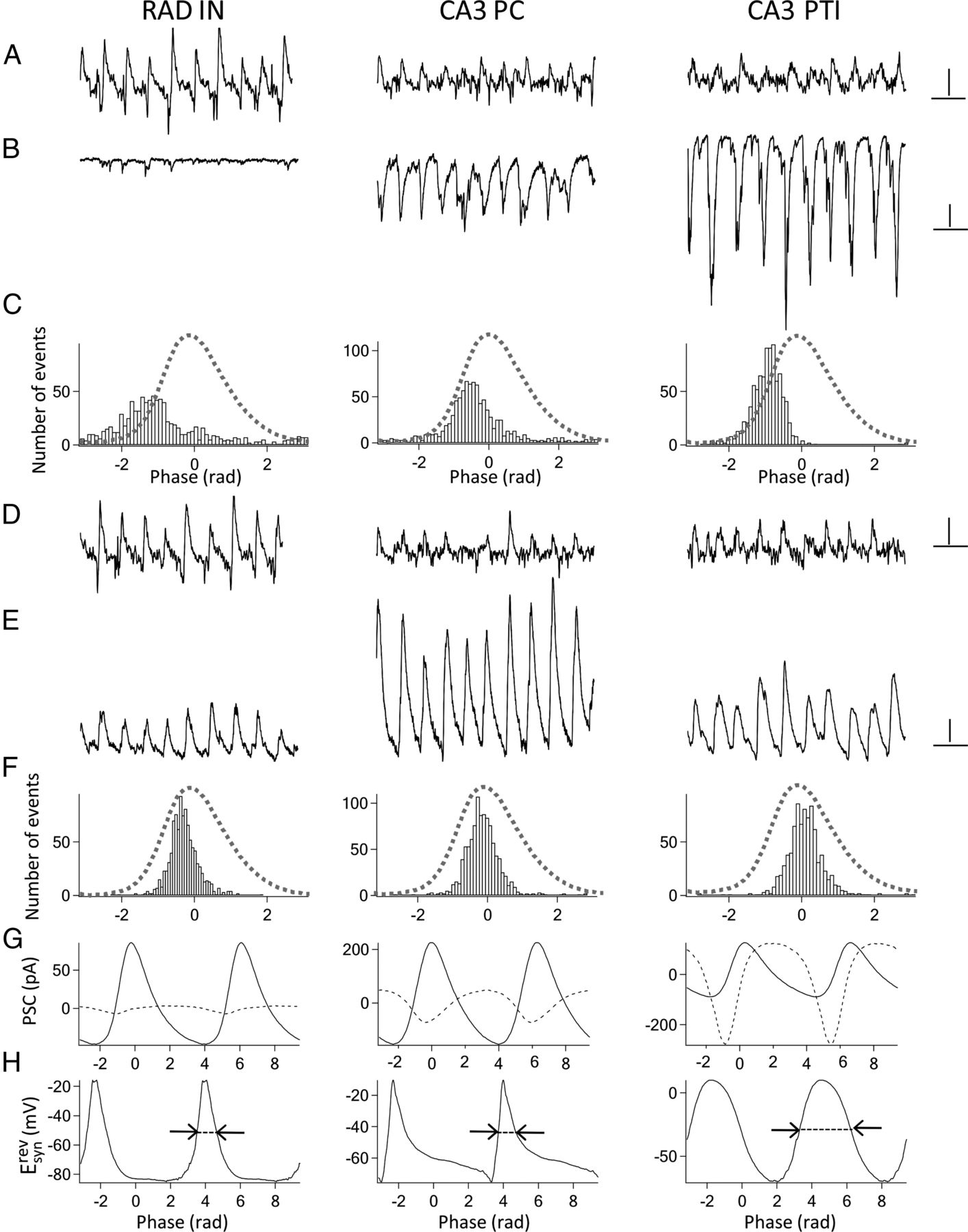 Feedforward Inhibition Underlies The Propagation Of Cholinergically Types Oscillations Download Figure