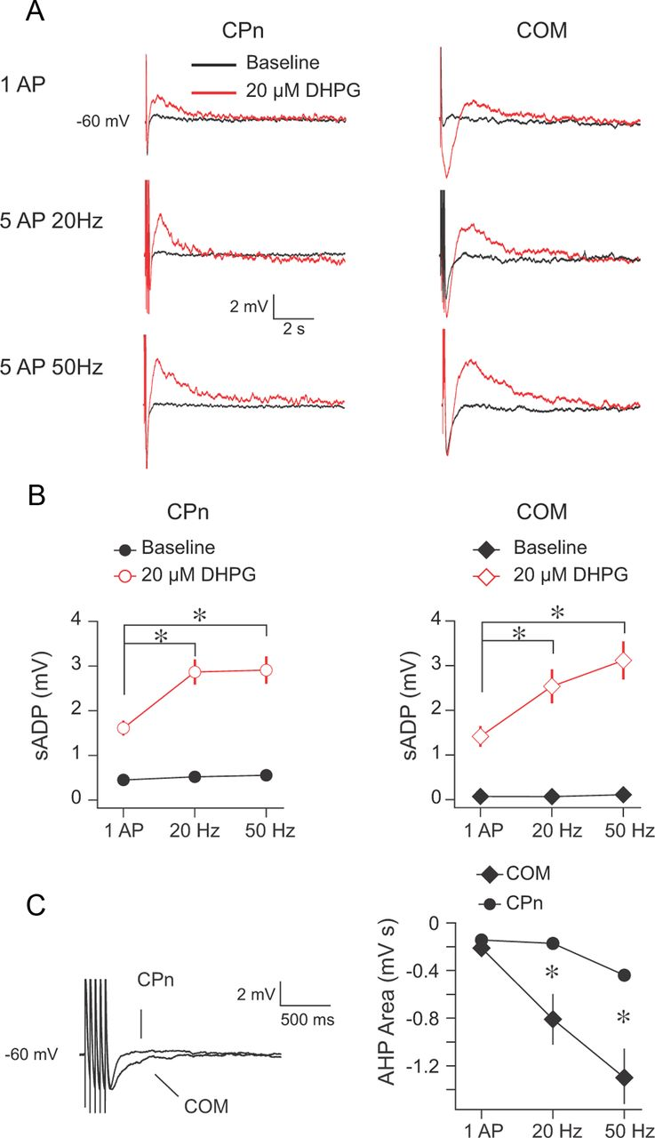 Dendritic Generation of mGluR-Mediated Slow Afterdepolarization in