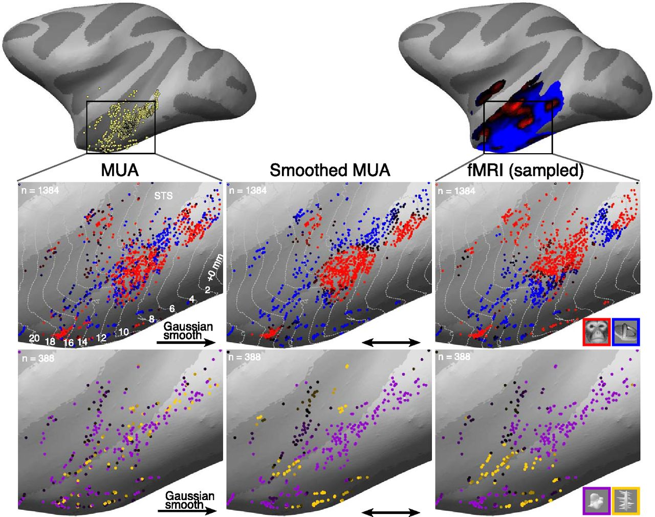 Large-Scale, High-Resolution Neurophysiological Maps Underlying fMRI