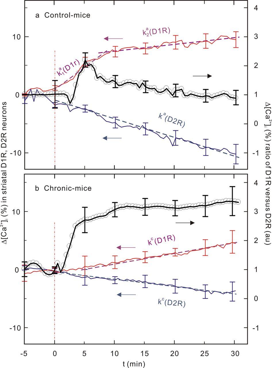 Chronic Cocaine Dampens Dopamine Signaling during Cocaine