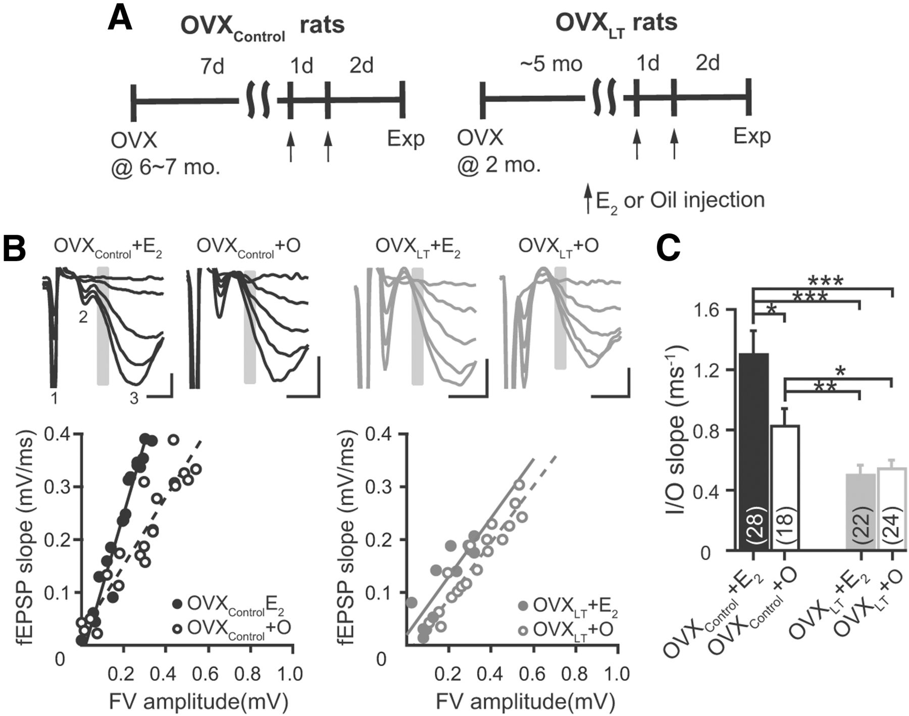 Ovarian Hormone Loss Impairs Excitatory Synaptic Transmission At Old Block Diagram And Pare This With Figure2 The New Download Figure Open In Tab