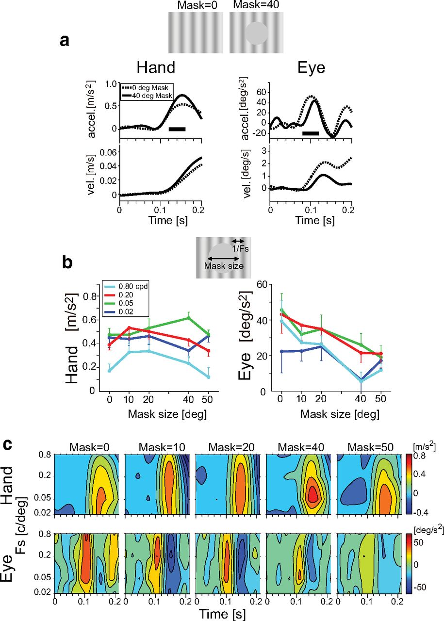 Eye Movements Reveal Temporal >> The Hand Sees Visual Periphery Better Than The Eye Motor Dependent