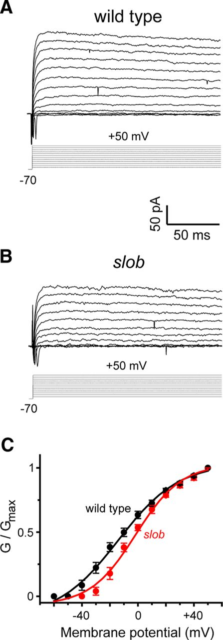 Cell-Specific Fine-Tuning of Neuronal Excitability by