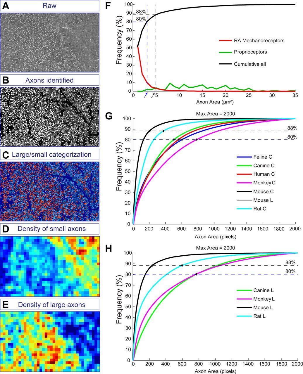Modality-Based Organization of Ascending Somatosensory Axons in the