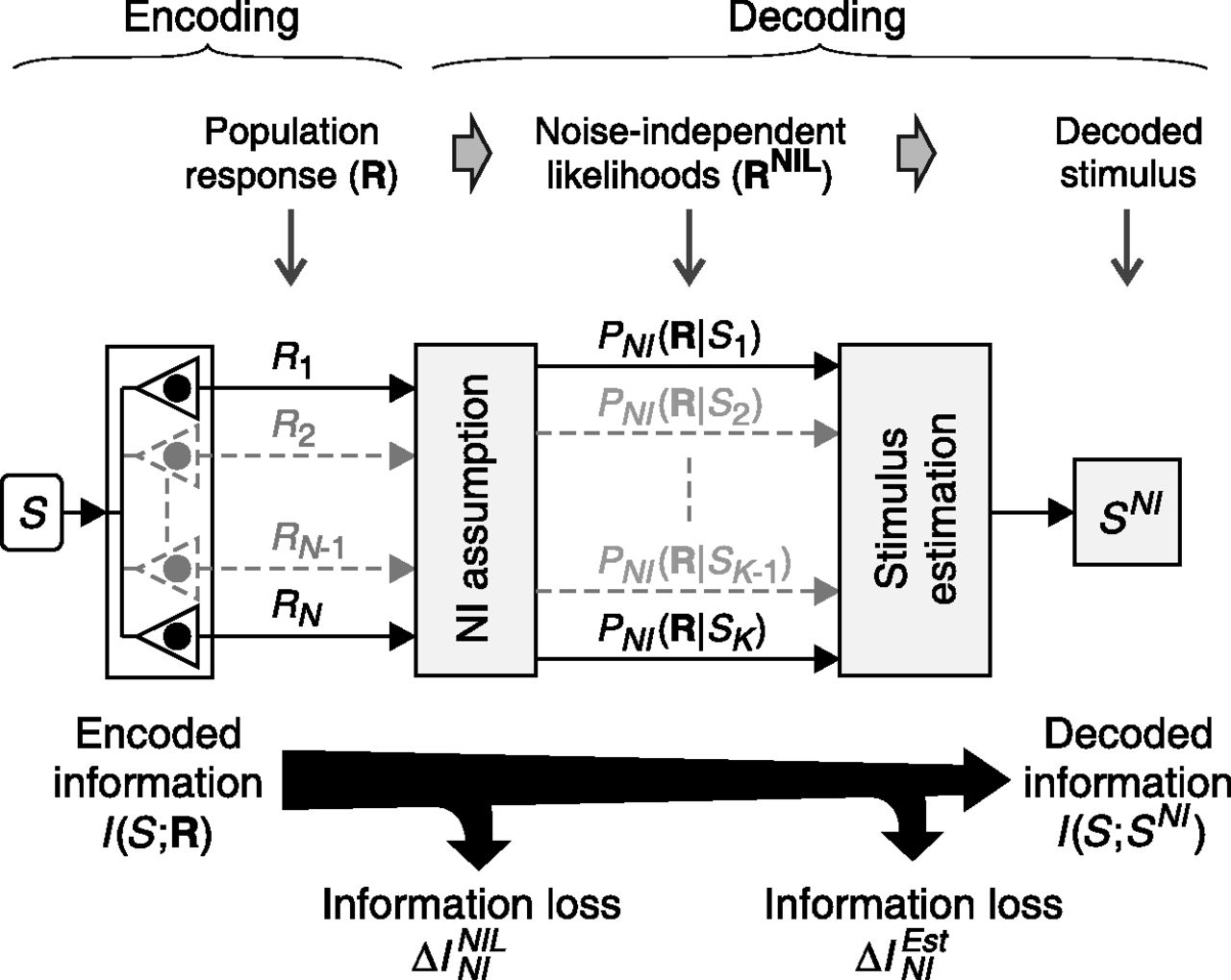 When and Why Noise Correlations Are Important in Neural Decoding