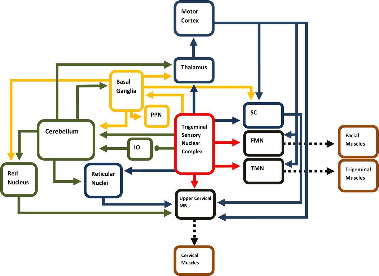 Ziemlich Drehstrominduktions Motor Schaltplan Ideen - Der Schaltplan ...