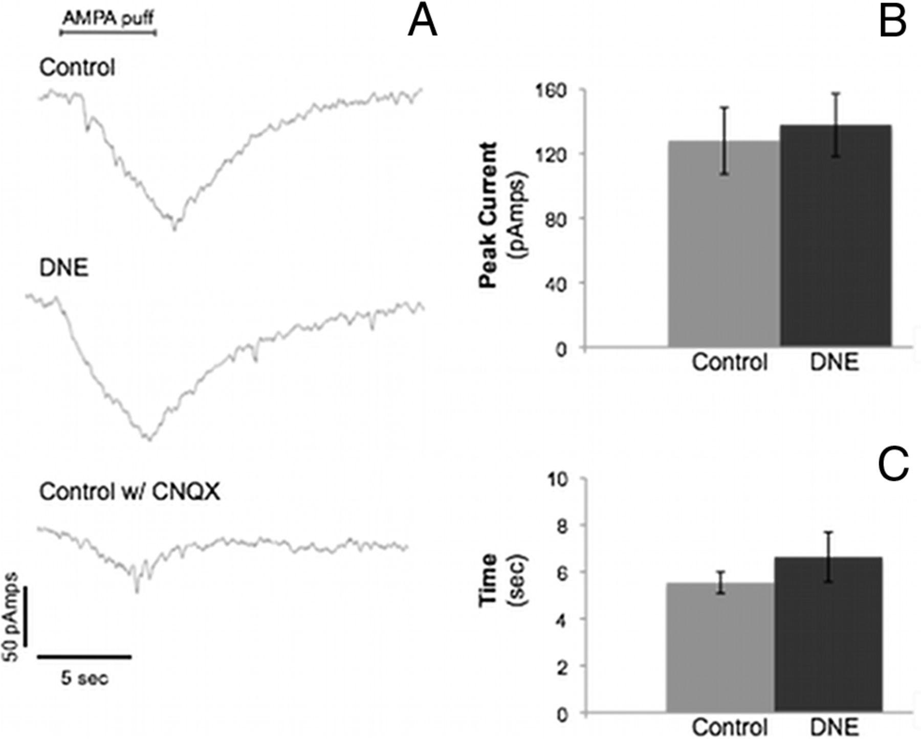 Developmental Nicotine Exposure Alters AMPA Neurotransmission in the