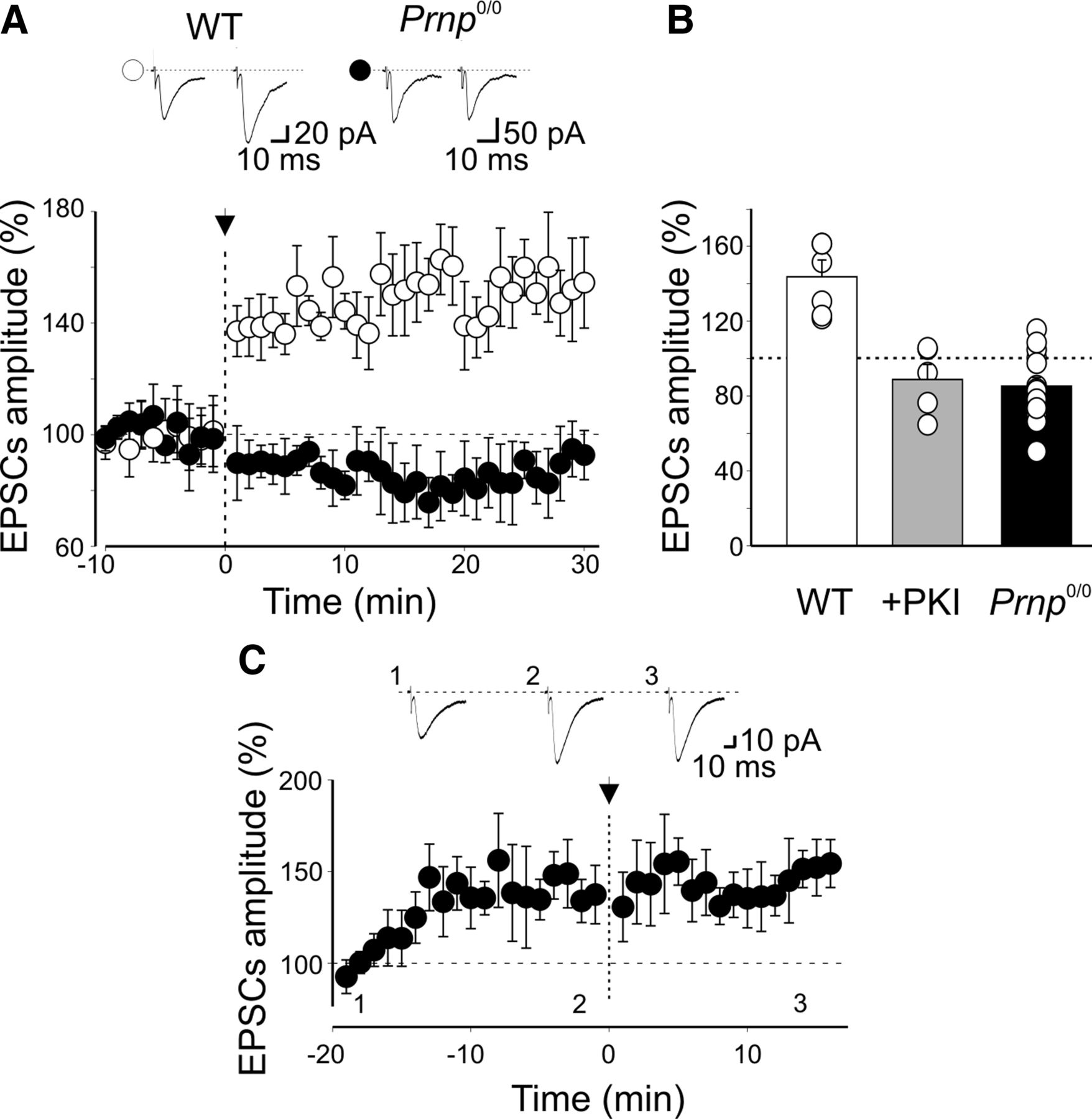 PrPC Controls via Protein Kinase A the Direction of