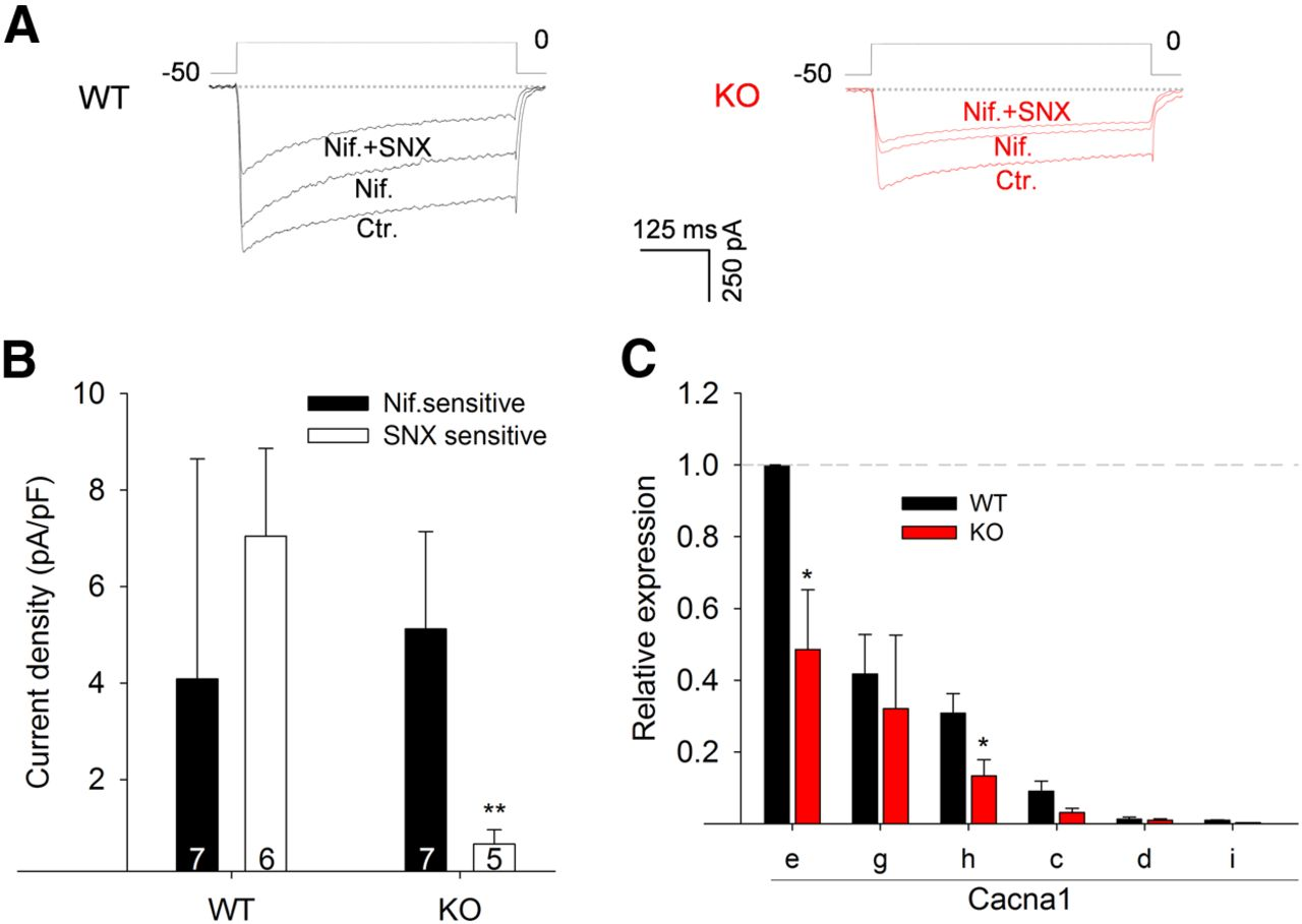 LMO4 Is Essential for Paraventricular Hypothalamic Neuronal Activity ...