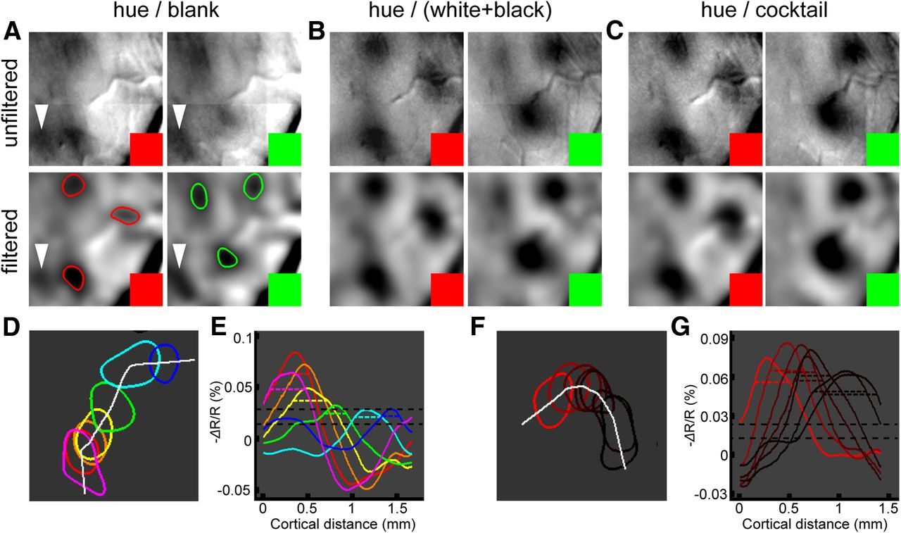 Perceptual Color Map in Macaque Visual Area V4   Journal of Neuroscience