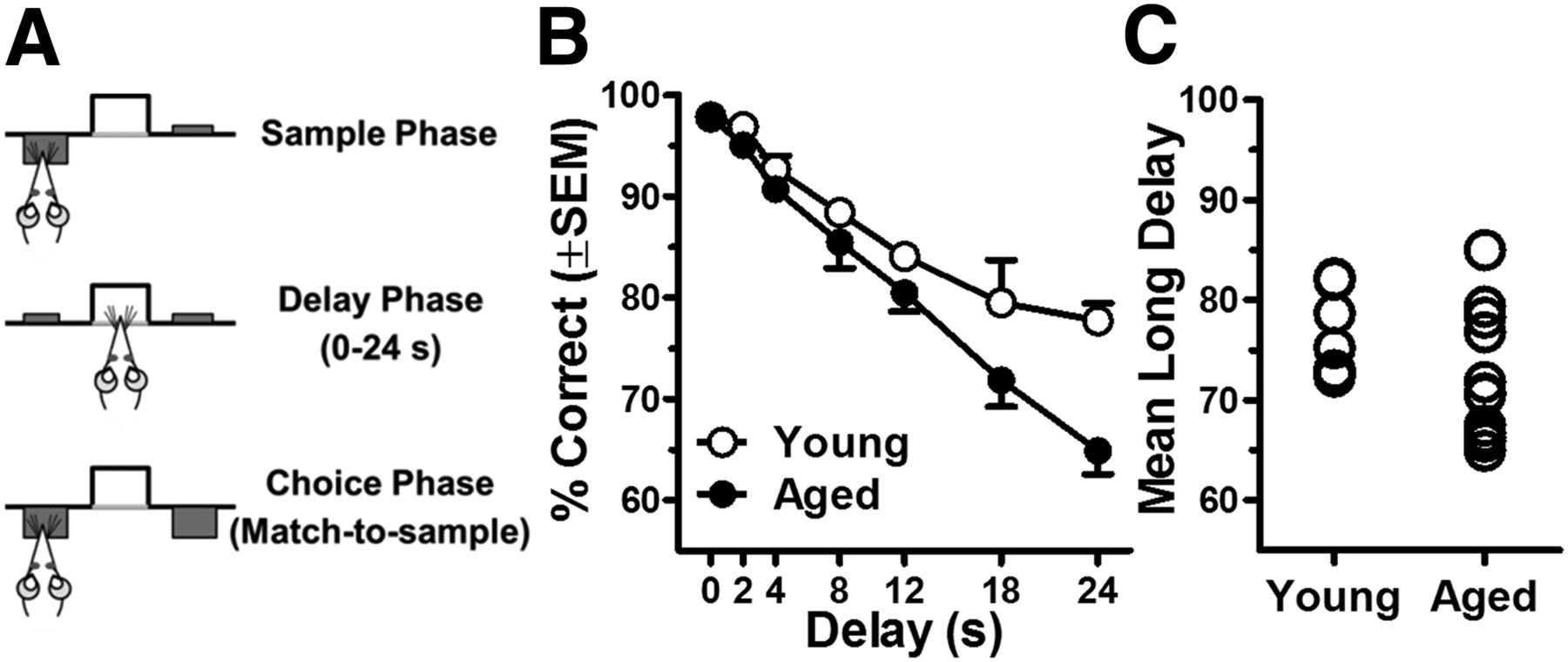 Prefrontal Cortical Gabaergic Dysfunction Contributes To Age Related Delay Timer Circuit Moreover Furthermore 12 Volt Download Figure