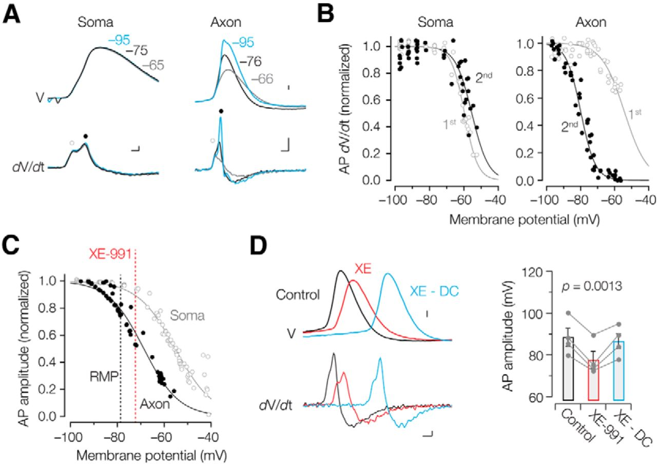 Heteromeric kv7273 channels differentially regulate action heteromeric kv7273 channels differentially regulate action potential initiation and conduction in neocortical myelinated axons journal of neuroscience ccuart Choice Image