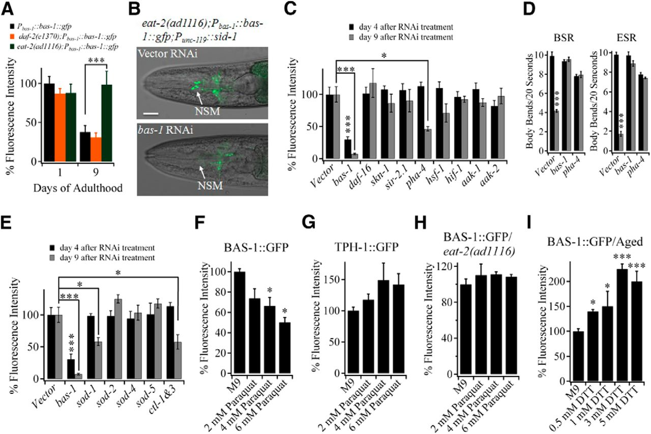 Longevity Manipulations Differentially Affect Serotonin