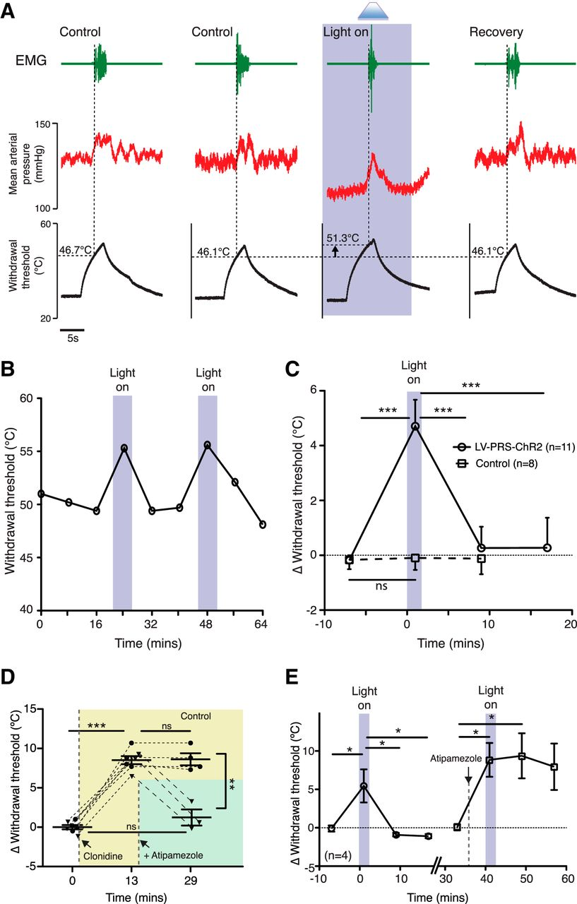 Optoactivation Of Locus Ceruleus Neurons Evokes Bidirectional Emg Hz Wiring Diagram Download Figure