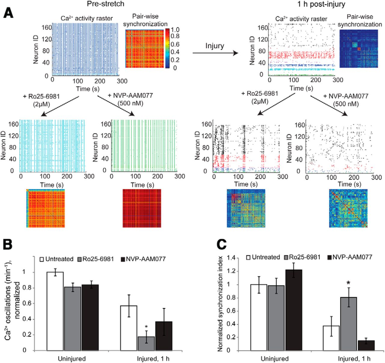 Single Neuron Nmda Receptor Phenotype Influences Neuronal Rewiring Cde Ham Iii Wiring Diagram Download Figure