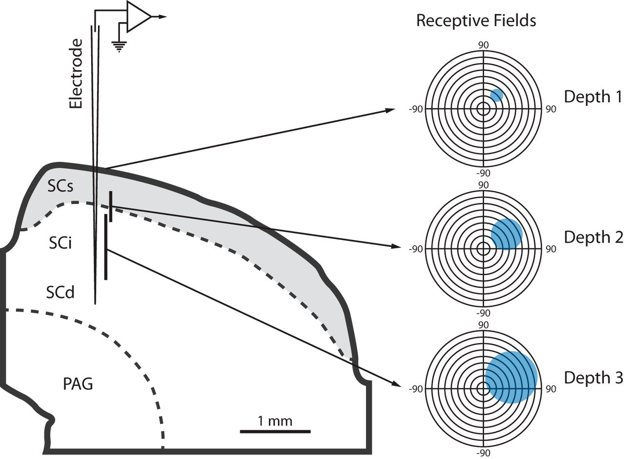 Multisensory Response Modulation In The Superficial Layers Of Q Meter Circuit Diagram Download Figure