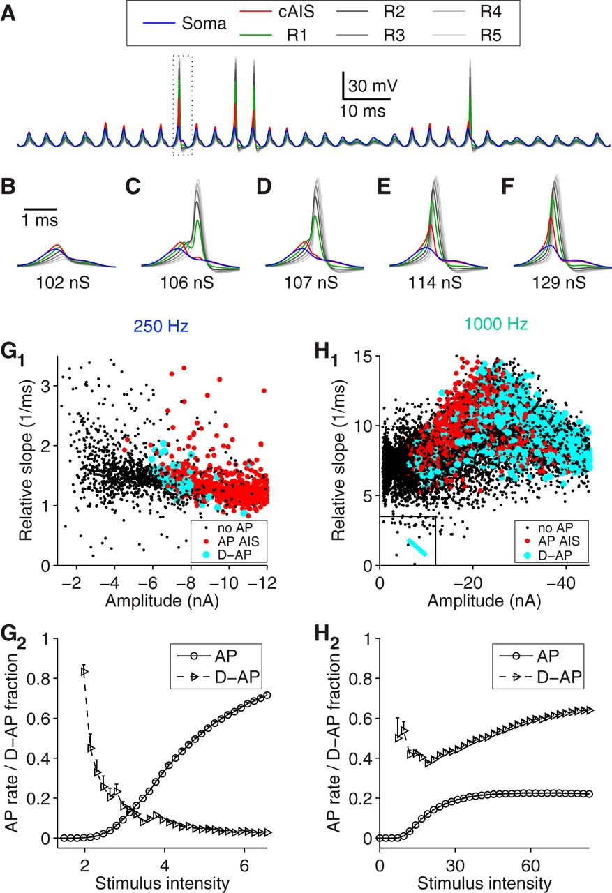 Action Potential Generation in an Anatomically Constrained