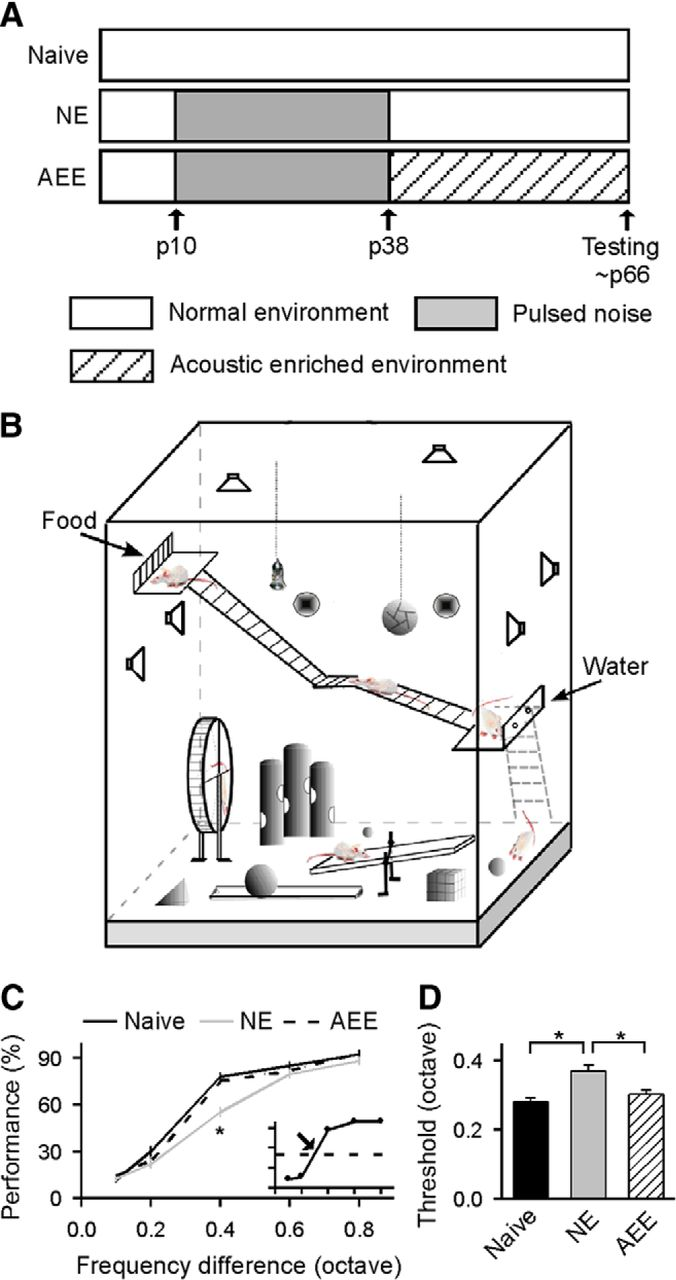 Environmental Acoustic Enrichment Promotes Recovery From House Wiring Radial Circuit Download Figure