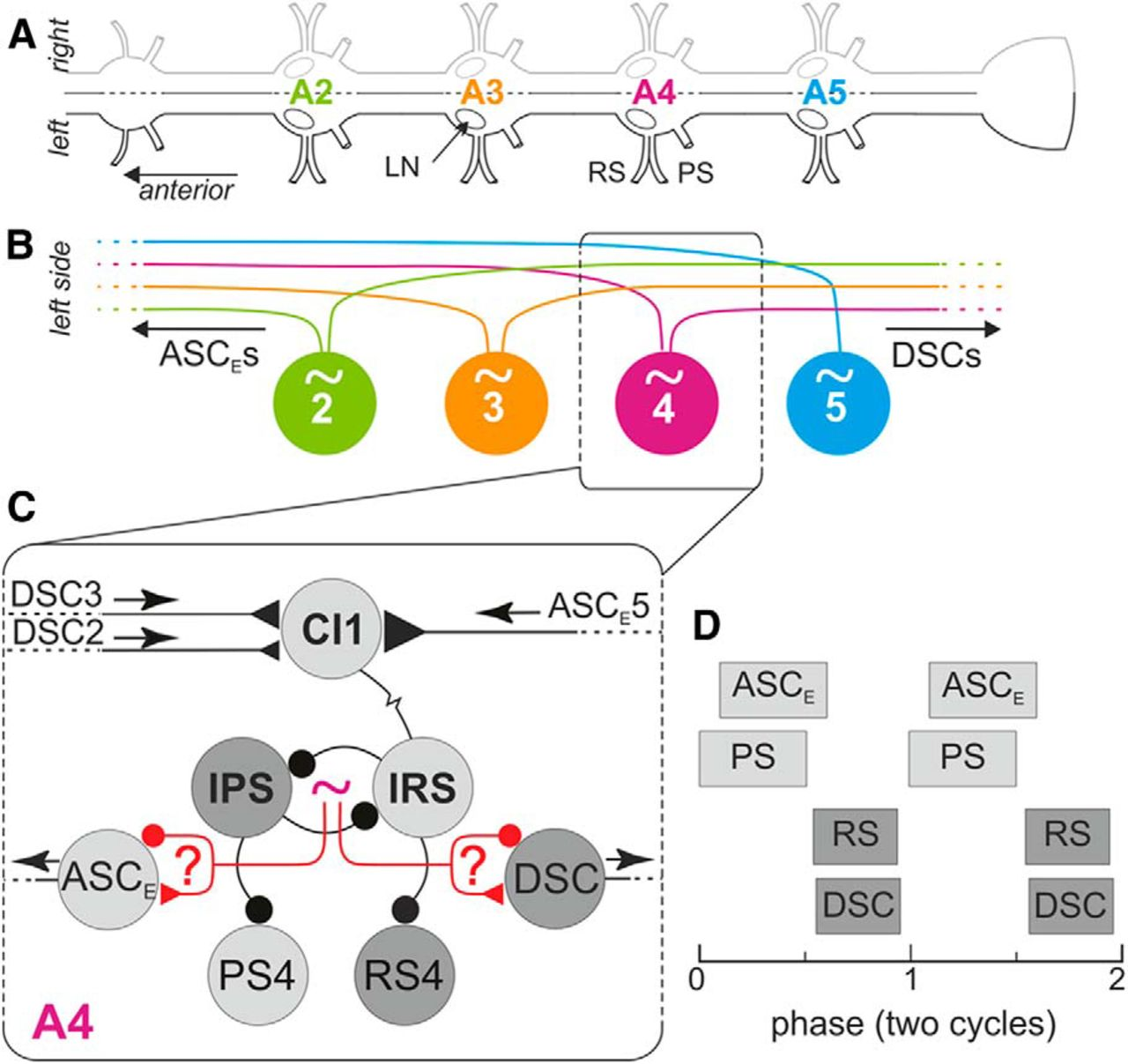 Mechanisms Of Coordination In Distributed Neural Circuits Encoding Measurement 73 Threephase Download Figure