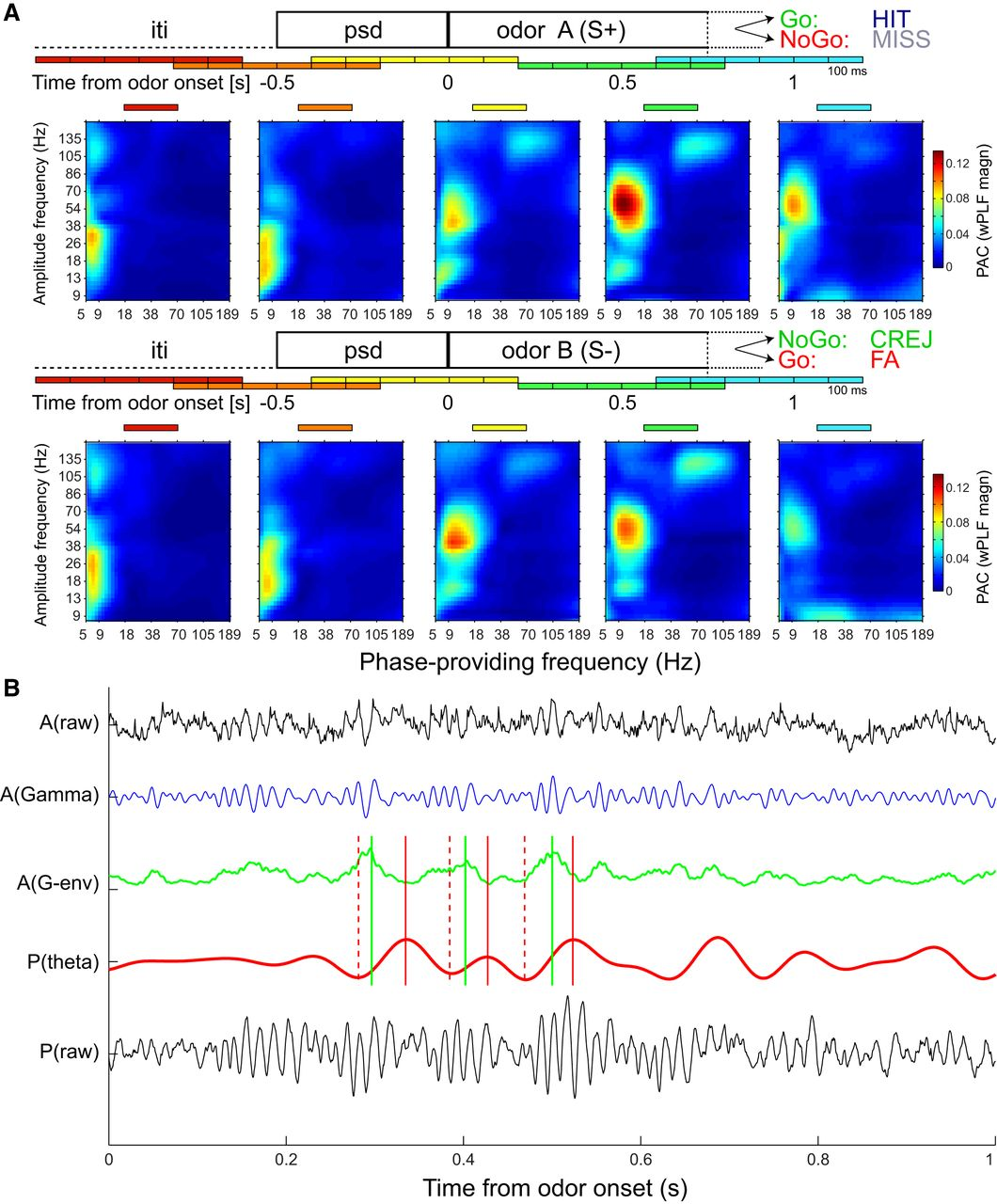 Phase-Amplitude Coupling in Rat Orbitofrontal Cortex