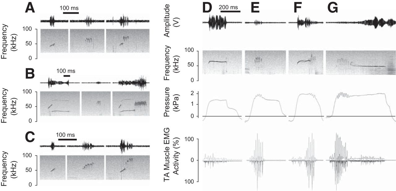 Rat Ultrasonic Vocalization Shows Features of a Modular