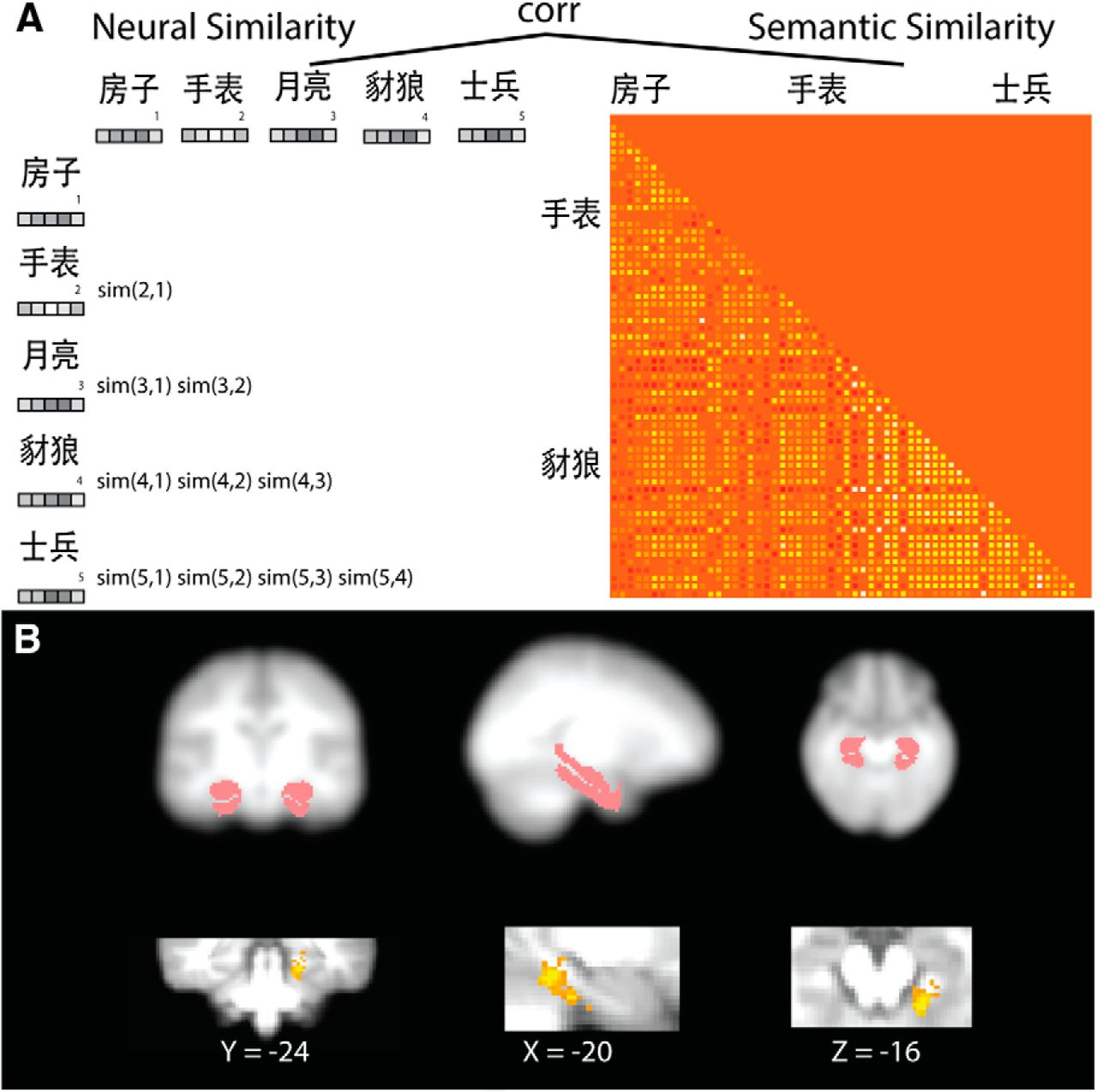 Global Neural Pattern Similarity as a Common Basis for