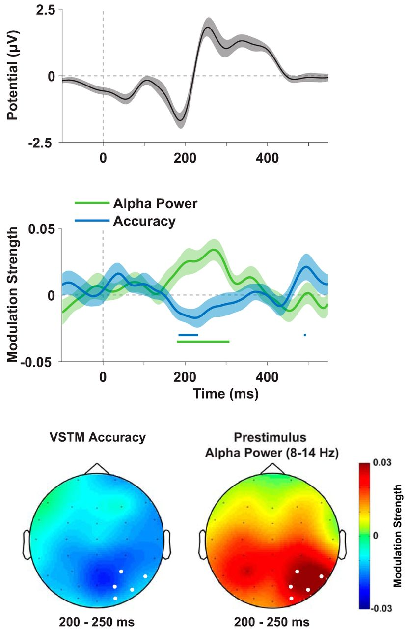 Oscillatory Brain State Predicts Variability In Working Memory Precision Peak Voltage Detector With A Long Time Download Figure
