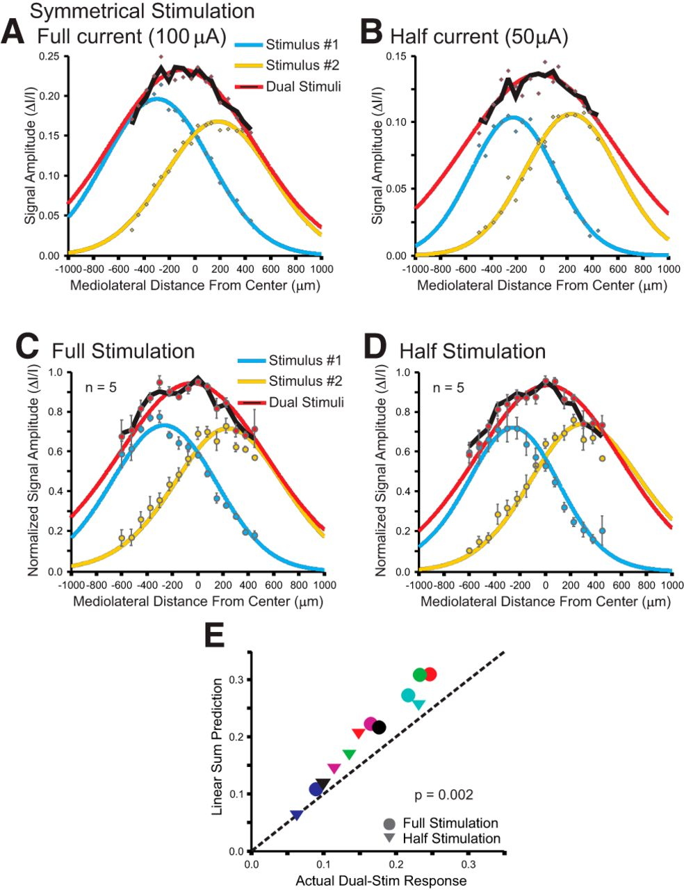 Response Normalization in the Superficial Layers of the