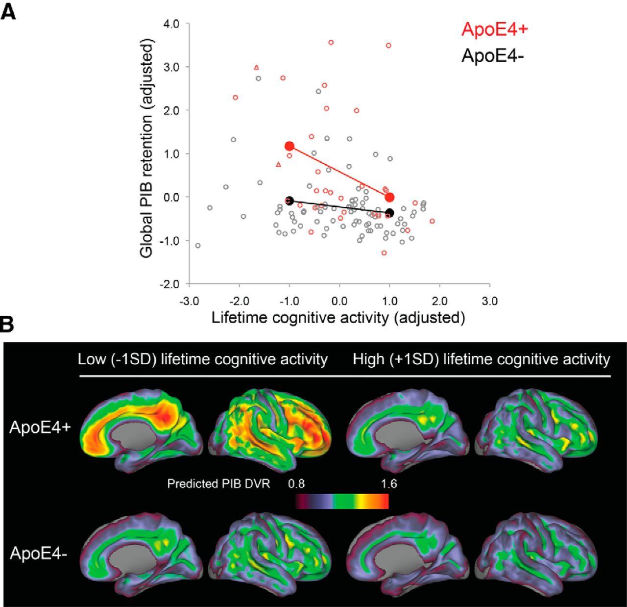 Gene–Environment Interactions: Lifetime Cognitive Activity