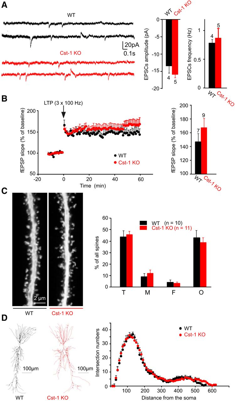 F9.large calsyntenin 1 regulates targeting of dendritic nmda receptors and  at edmiracle.co