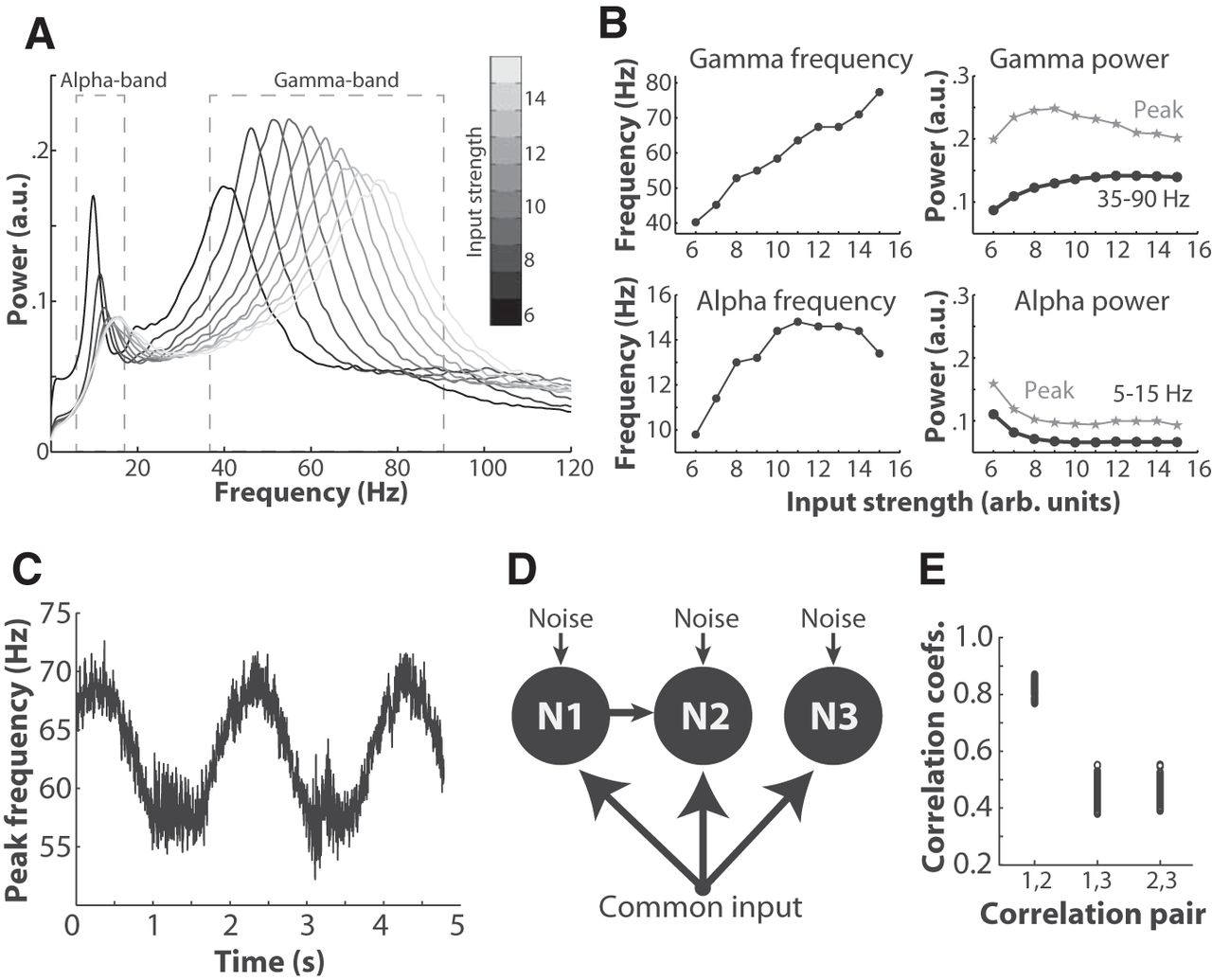 Fluctuations in Oscillation Frequency Control Spike Timing