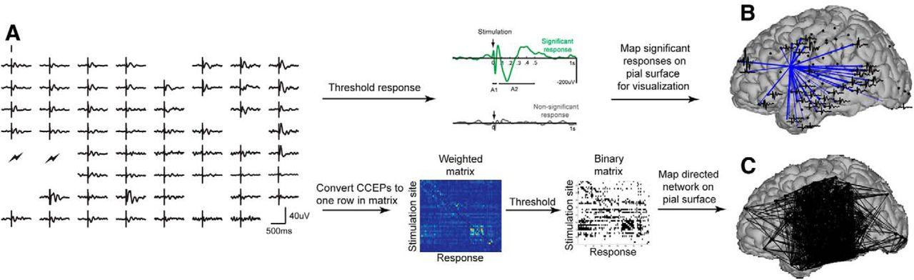 Corticocortical Evoked Potentials Reveal Projectors and Integrators ...