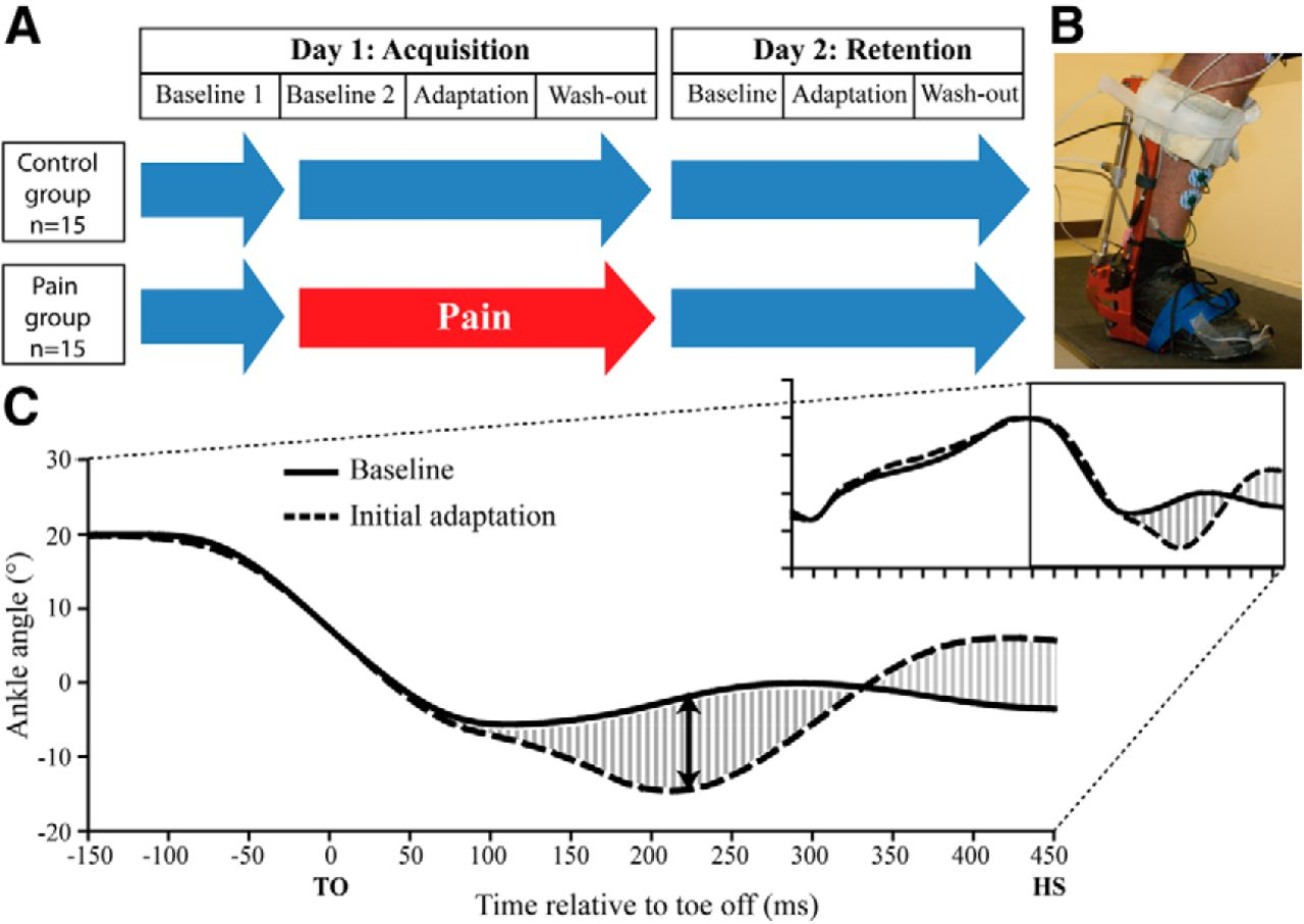 Tonic Pain Experienced during Locomotor Training Impairs