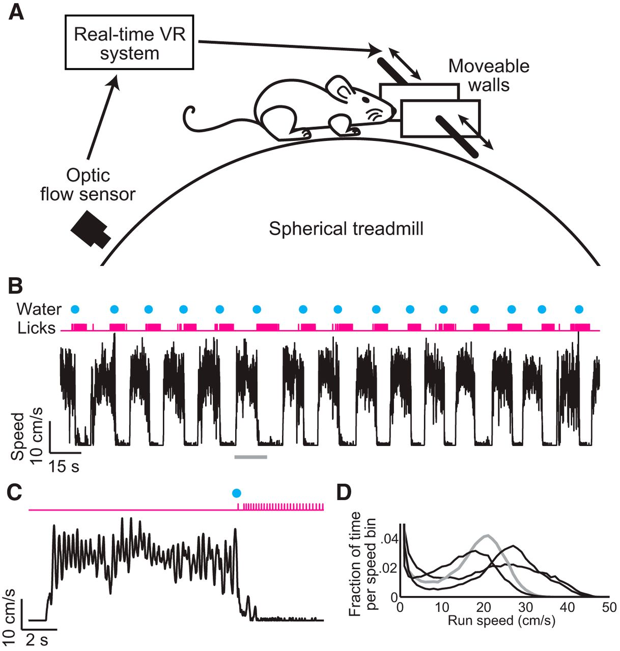 Natural Whisker-Guided Behavior by Head-Fixed Mice in