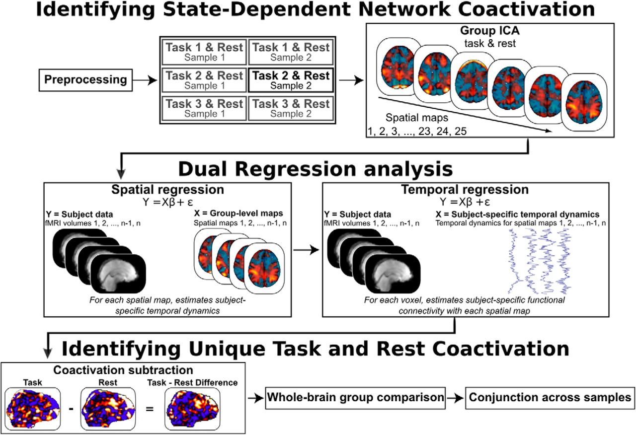 Precuneus Is a Functional Core of the Default-Mode Network   Journal