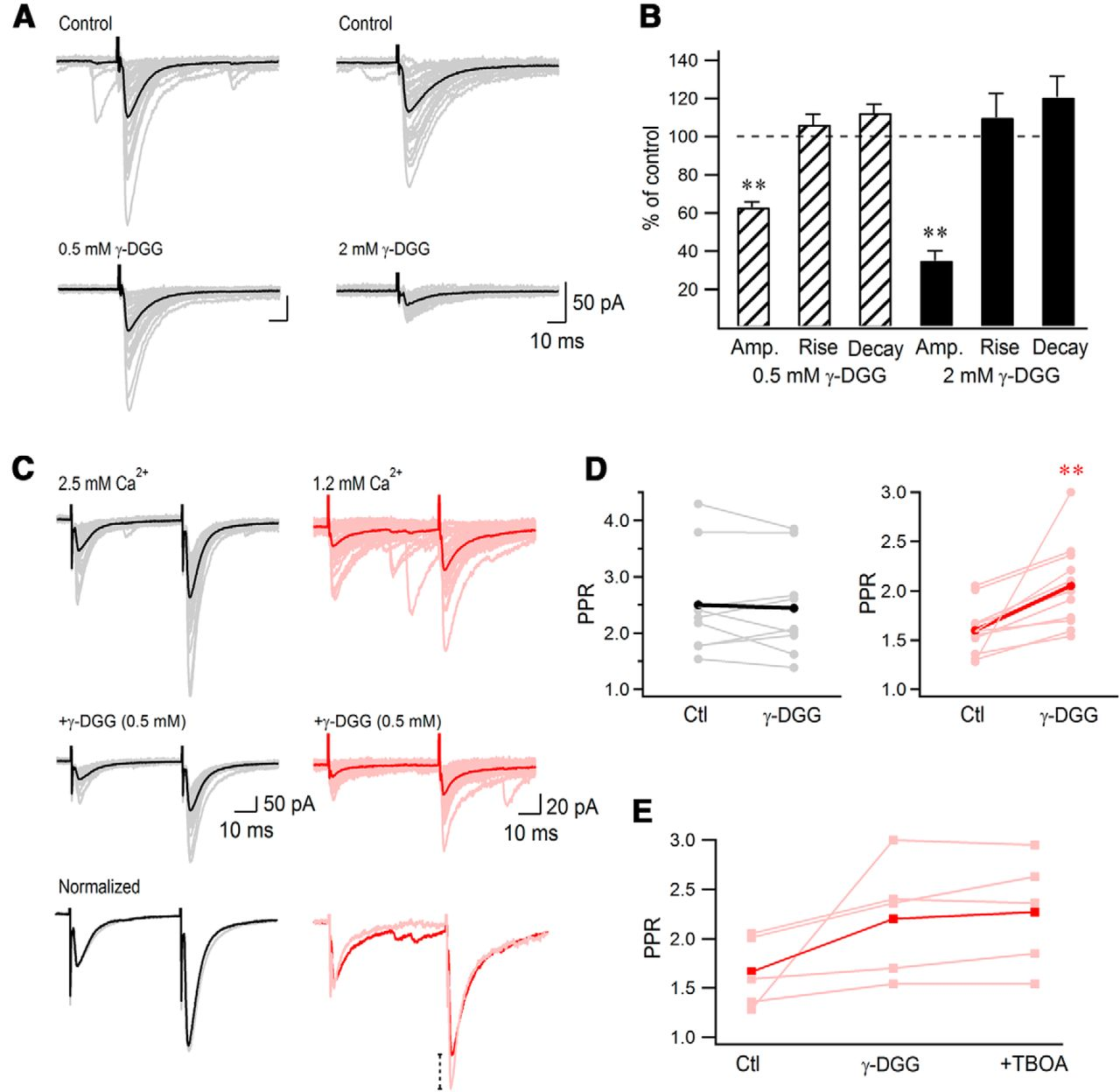 Interplay between Synchronization of Multivesicular Release
