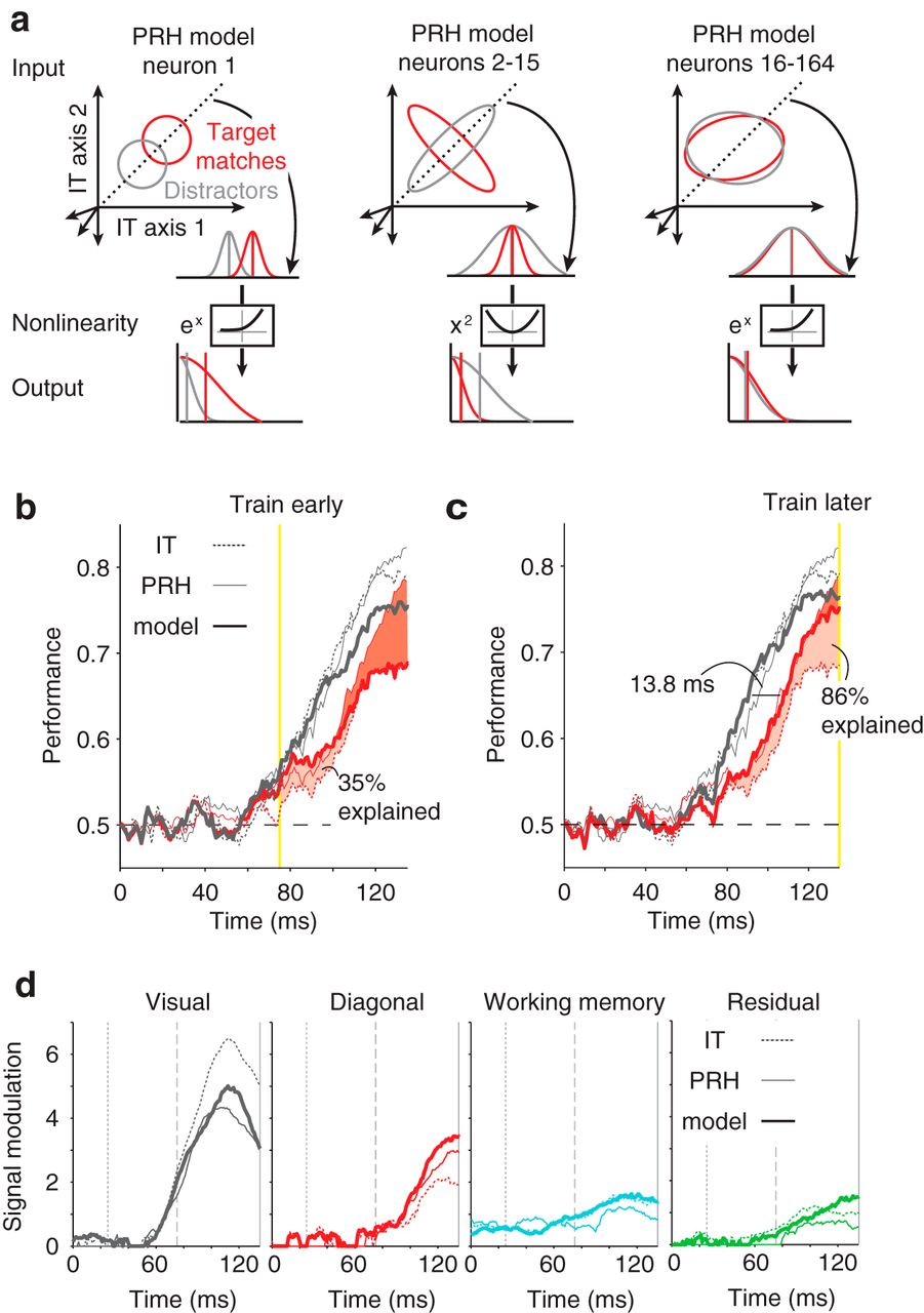Dynamic Target Match Signals in Perirhinal Cortex Can Be Explained