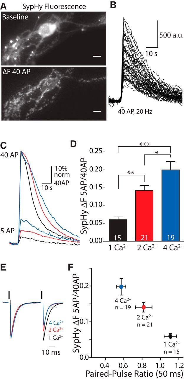 Vesicular Glutamate Transporter Expression Level Affects Synaptic